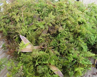 Fern Moss For Terrariums, Gardens, Vivariums, And More
