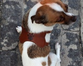 Leather Harness for your puppy(dog) - Vivi in oz