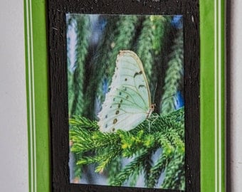 Fridge Magnet with photography print of a white butterfly