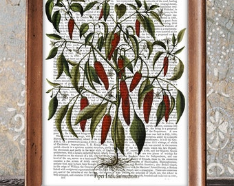 Kitchen Poster Peppers Print 3 - kitchen decor kitchen print Kitchen art dining room decor food illustration gift for hostess gift cook