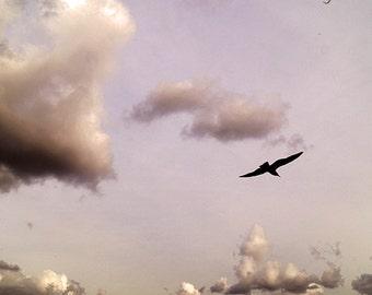 Sky Photography - 8x8 print - Fine Art Photography - cloud photography - wall art - nature photography - clouds photo - bird photography