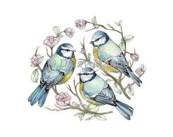 "Little Birdies Blue Tit Nest - Bird Watercolour Painting Ink Pen Illustration Giclée Fine Art Print - 5x7"""