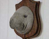 Manatee! - Large Mounted Animal Head