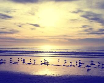 Seagulls at Sunset, Desaturated Sunset, South Carlsbad Beach, California