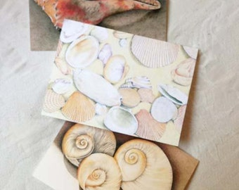 Sea Shell Notecard Set