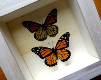 Real Danaus Plexippus Framed - Taxidermy - Monarch Butterfly - Home Decoration - Collectibles