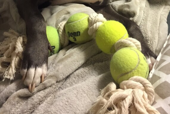 Large Dog Toys Balls : Bully balls the durable dog toy large tennis ball cotton