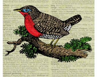 Bird Engraving Print on a Dictionary Page Background. Sizes 5''x7'', 8''x10'', 11''x14'' and 16''x20''. Plus More.