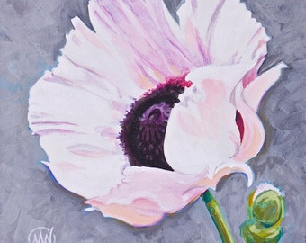"Pale Pink Poppy Flower Original Botanical Painting Acrylic on Canvas 10""x10"""