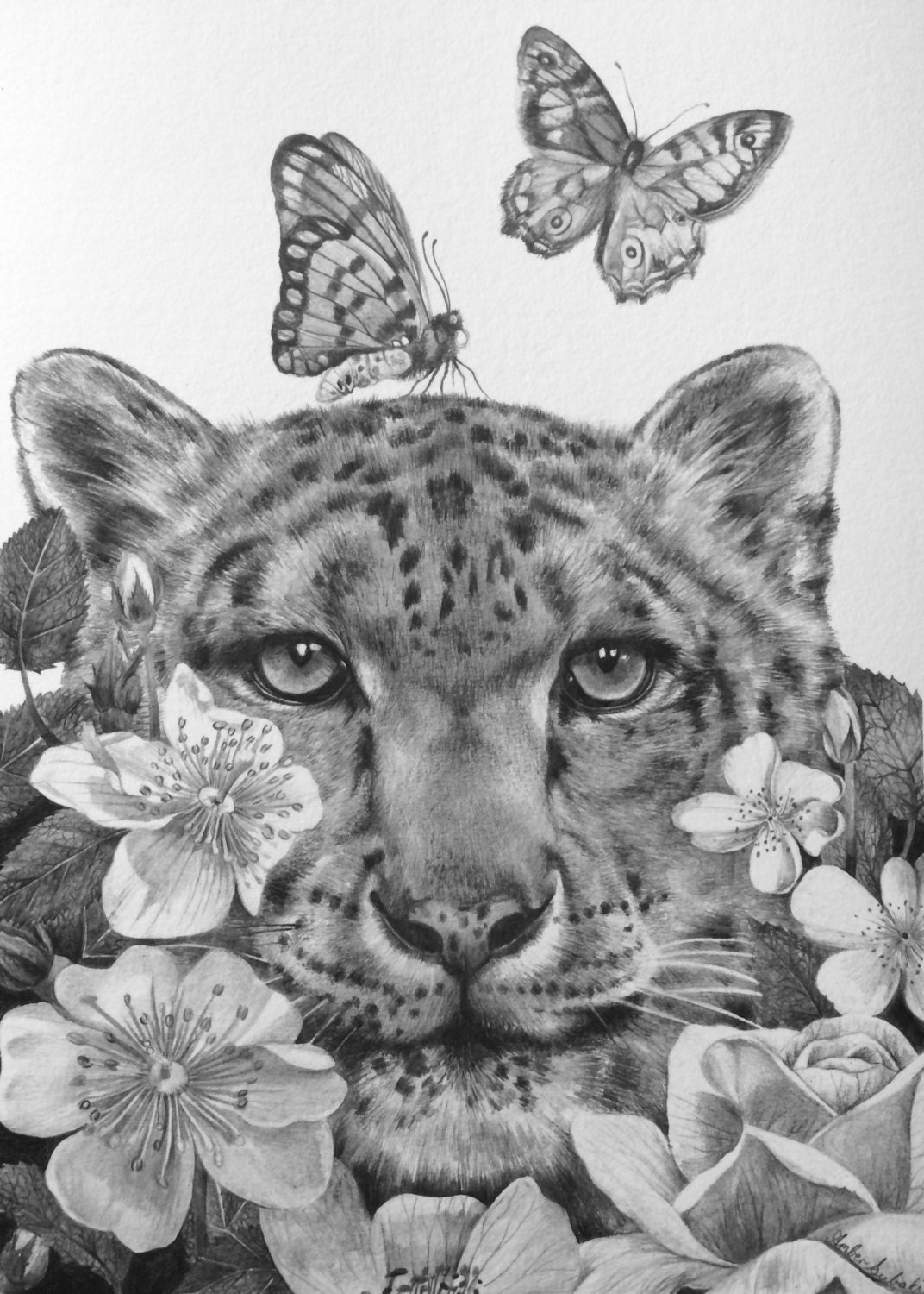 giclee print drawing snow leopard butterfly flower surreal cat