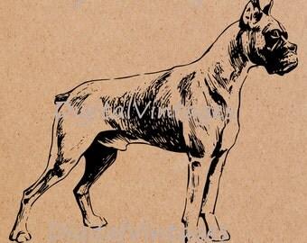 Digital Image Boxer Dog Vintage Download Printable Graphic Antique Clip Art for Transfers Making Prints HQ  SVG,jpg,png 300dpi
