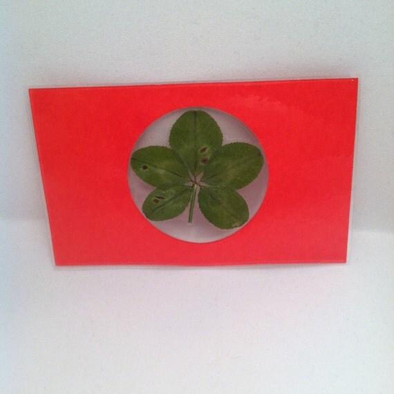 Real 5 leaf clover