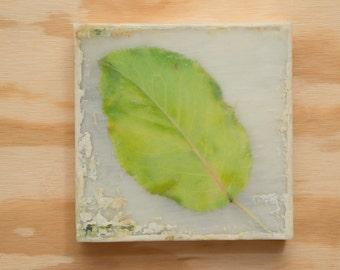 Leaf Art Photo Encaustic Original Art 8x8