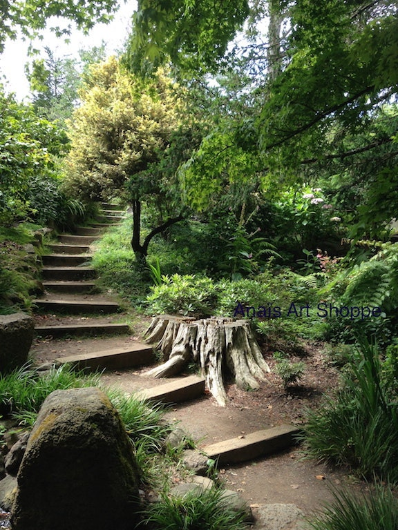 going up the path photo of san francisco botanical garden