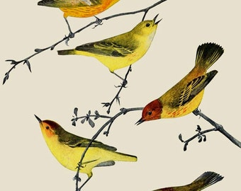 Birds in Trees Vintage Illustrations Blue Yellow Orange Green ATC 0101