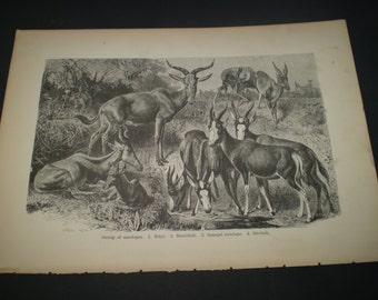 Standard Natural History By J S Kinsley