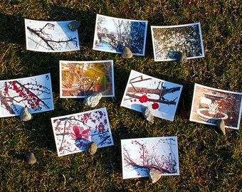 Set of 9 postcards with photos of Japanese plum blossom