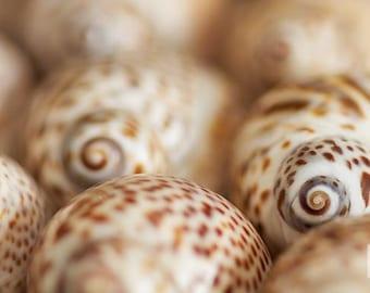 Seashells Art Print, Macro Photography, Beach Decor, Brown Wall Art, Nature Print