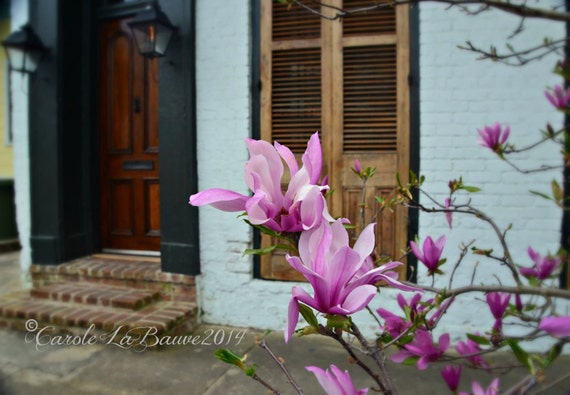 NEW ORLEANS STREETSCAPE ~ Doors of New Orleans ~ Japanese Magnolias ~ Louisiana Fine Art Photography ~ Shutters ~ Gas lantern