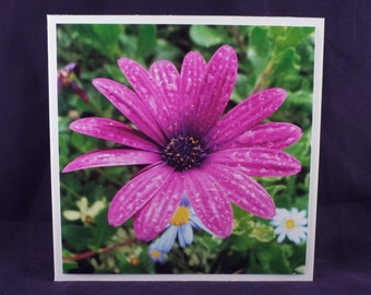 Daisy After The Rain (Square Floral Blank General Use Card)
