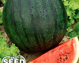 Sugar Baby Watermelon Seeds - 50 SEEDS NON-GMO