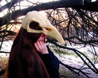 raven bird skull mask