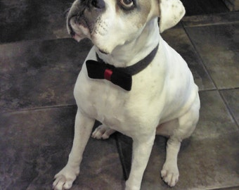 handmade felt bowtie for dog collar   - photo prop  ~ Jack Bowtie ~ Boxer Friends Rescue MADE TO ORDER