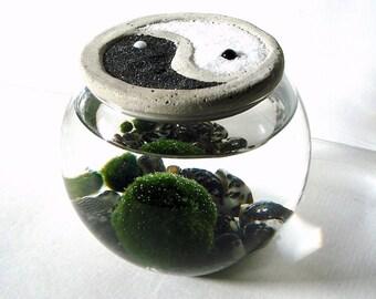 Yin Yang. Zen. Garden. Stone Top. Marimo Ball. Unique. Terrarium