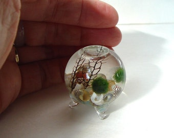 Zen. PICO. Orb. Marimo Ball. Ecosphere.Terrarium