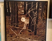 Surreal Forest Scene,Wolf Owl, 12x12 Wood Panel,