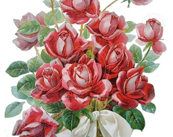 Antique Victorian Postcard Klein Collection Beautiful Lush Red Roses Bouquet Collage Digital Instant Download Images - rose1
