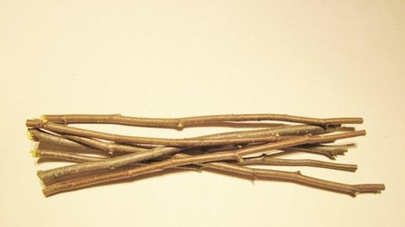 Beech sticks craft supply mother of the woods fagus