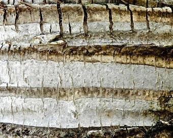 Neutral Abstract Art, Natural Wall Decor, Minimalist Art, Modern Art, Tropical Art, Nature Photography, Tree Bark,Tree Print,Rustic Wall Art