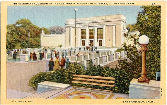 Vintage California Postcard Steinhart Aquarium In Golden