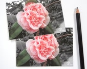 pink flowers note card set, camellia photograph cards, botanical stationery, flower invitations, 5 cards and envelopes