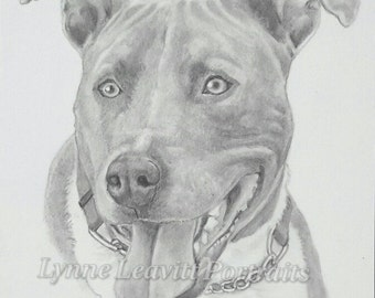 Best 25 Drawings of dogs ideas on Pinterest  Dog pencil