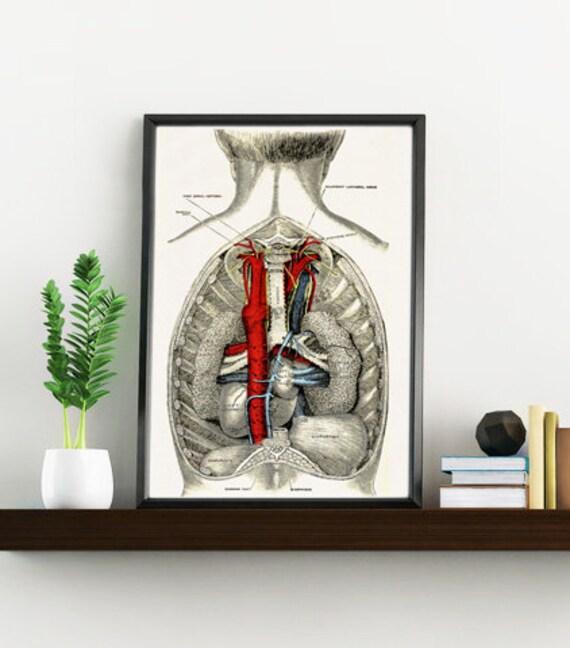 Spring Sale Open Human Back Anatomy Science prints A4 wall art- Anatomy art wall decor. Open back study wallart, office art WSK026