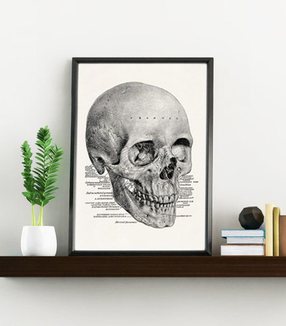Skull anatomical study Wall art print, Human skull wall decor Human skull study art print art print office decor SKA153WA4