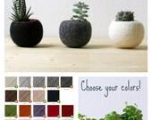 Succulent planter / air plant holder / cactus pot / plant vase / modern decor / set of 3