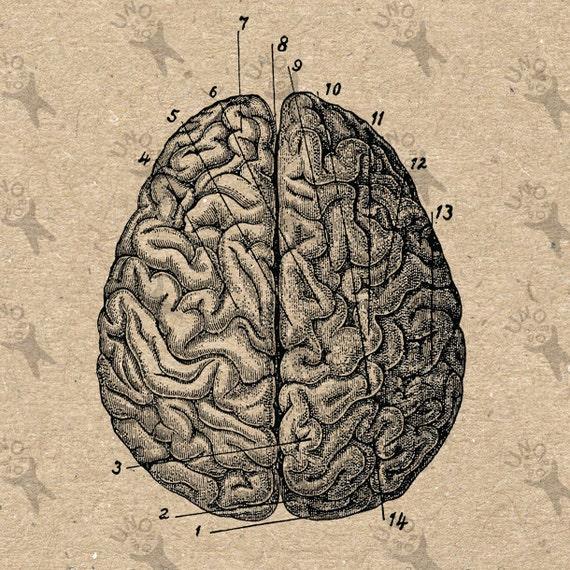 Vintage image Anatomic...
