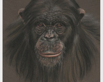 Chimpanzee Art, Original Pastel Drawing, Animal Painting 8 x 10, Not a Print, SFA, Small Format Art, Ape Wildlife Drawing, ADA-397OA