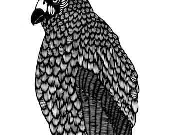 Perched Vulture