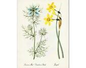 Daffodil Art Print, Botanical Art, Posters, Floral Print, Botanical Illustration, Spring Flowers Print, Wall Art, Wall Decor, Wildflowers