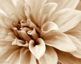 Dahlia photo print, floral wall decor print, flower photography, beige brown fine art print, monochrome dahlia picture, botanical wall art