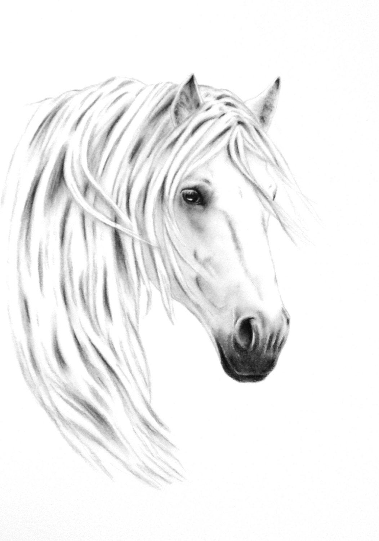 pferd kunst kohlezeichnung white horse zeichnung wildpferd