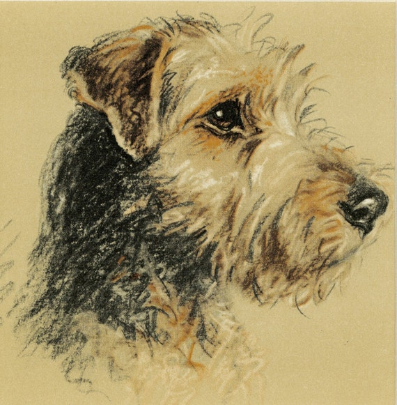 Vintage Dog Print Welsh Terrier By Lucy Dawson C 1939 Vintage