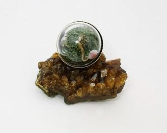 Real seahorse globe ring oddities beach curiosities boho hippie seahorse glass ring