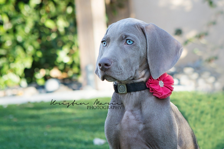 Dog Flower Collar Wedding Dog Collar Flowers Wedding