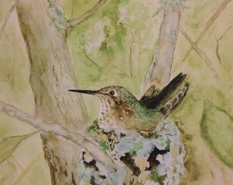 Hummingbird in a nest PRINT of an original watercolor painting,  Bird, for her, birthday, mother, daughter, wall art, nature, green,