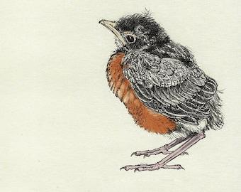 70  Baby Robin Card